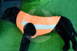 Gilet giubbotto protettivo per cani Canicom Solengo j45 taglia L lato