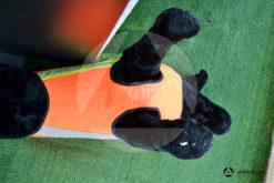Gilet giubbotto protettivo per cani Canicom Solengo j45 tg L basso
